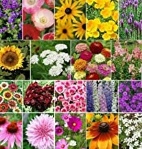 Seeds Late Bloomer Fall Blooming Wildflower Mix 19 Species of Wildflower Seeds Get 200 Seeds Seeds #SBF01YN
