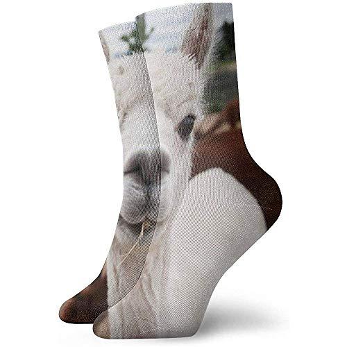 iuitt7rtree Lustige Socken, Casual Crew Socken, Custom Novelty Socken, Damen/Herren Sportsocken, Halloween Cosplay Socken, Alpaca Lavender Farm Classic Socken 30CM Fußball Socken Tube Socken