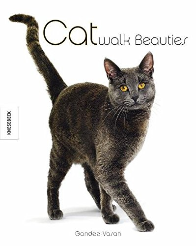 Catwalk Beauties: Katzen mit Stil und Charakter