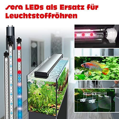 sera 31255 LED daylight sunrise 520 – Farbechtes und natürliches Tageslicht (6.000 – 8.000 Kelvin) - 3