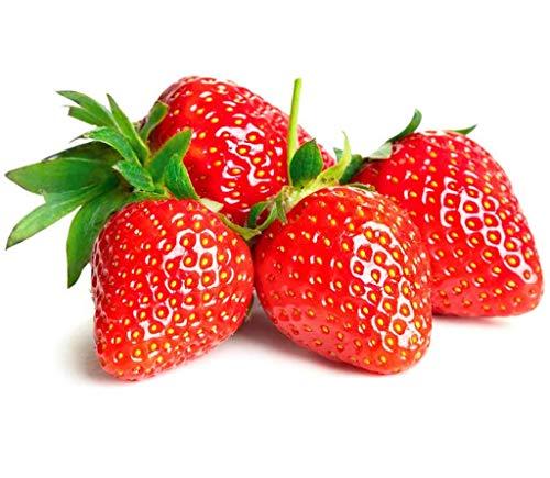 RIESENERDBEEREN/ca. 100 Samen/Größer als ein Hühnerei - Die größte Erdbeere der Welt