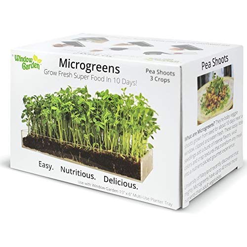"""shoots Window Garden Microgreen Organic Pea Shoot 3 Pack Refill – Use with Grow n Serve Kit, Multi-Use 15"""" x 6"""" Planter Tray, Pre-measured Soil + Seed. Easy and Convenient, Sprout 3 Crops of Superfood Greens"""