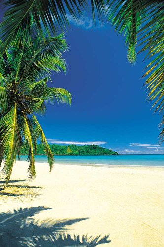 Beaches - Palm Beach IntoTheBlue - Beach Poster Foto Strand Palmen Meer Paradies - Grösse cm + 1 Ü-Poster der Grösse 61x91,5cm