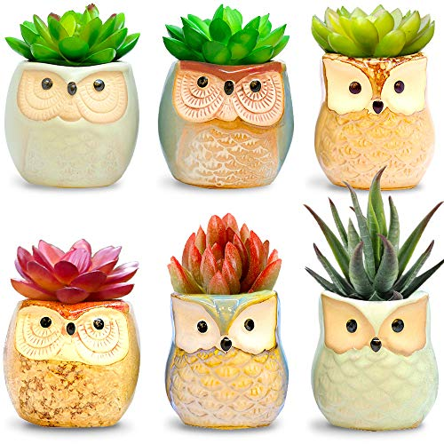 Amaze Owl Assorted Artificial Succulent Plants and Owl Planters | Set Of 6 Mini Faux Plants and Ceramic Pots | Indoor Office Table Decorations| Housewarming Ideas| Living Room Table Shelf Desk Decor