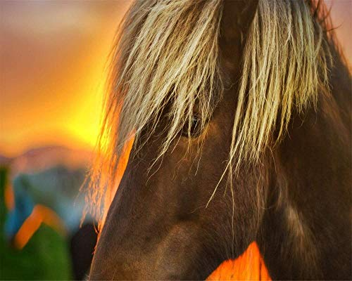 JCILZX schilderen op nummersets DIY canvasverf voor volwassenen en kinderen beginners vlas paard bij zonsopgang-16x20 inch (zonder lijst)