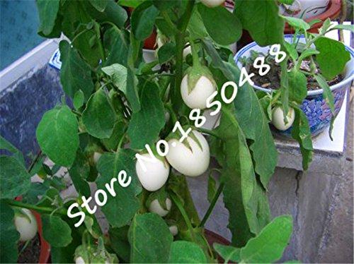Blanc cerise graine de tomate mini-tomates quatre saisons de semences de légumes - 100 PCS