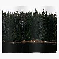 Evergreen Forest Dark Nature Trees Lake Coast Green El póster de decoración de interiores más impresionante y elegante disponible en tendencia ahora