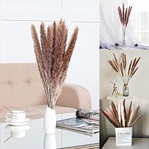 30 x Pampasgras Trockenblumen, Natürlich Phragmites Blumenstrauß Getrocknet Deco für Pampasgras Deko & getrocknete Blumen - Trockenblumenstrauß Vase für Hause Wohnzimmer Inneneinrichtungen Fotografie