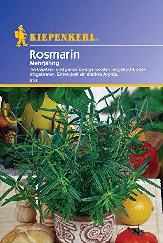 Sperli Gemüsesamen Rosmarin mehrjährig, grün