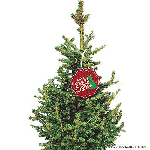 Kleine Fichte Little Santa - Picea abies - Nachhaltiger Weihnachtsbaum für Haus & Garten - Lieferung erfolgt im 12 Liter Container und einer Höhe von 80-100 cm - Qualität von Garten Schlüter