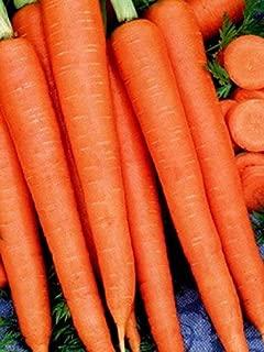 David's Garden Seeds Carrot Tendersweet SL7612 (Orange) 500 Non-GMO, Heirloom Seeds
