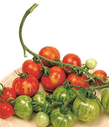 Il vous suffit de graines de l?gumes???Tomate???Tigerella???100?graines???Economy Lot