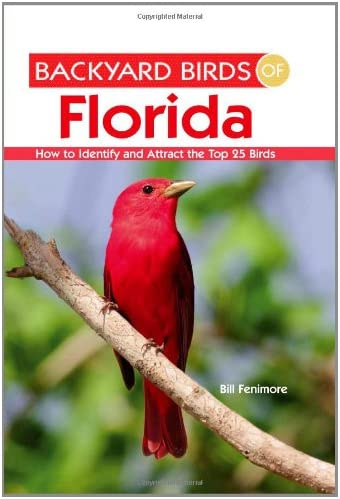Backyard Birds of Florida How to Identify and Attract the Top 25 Birds product image