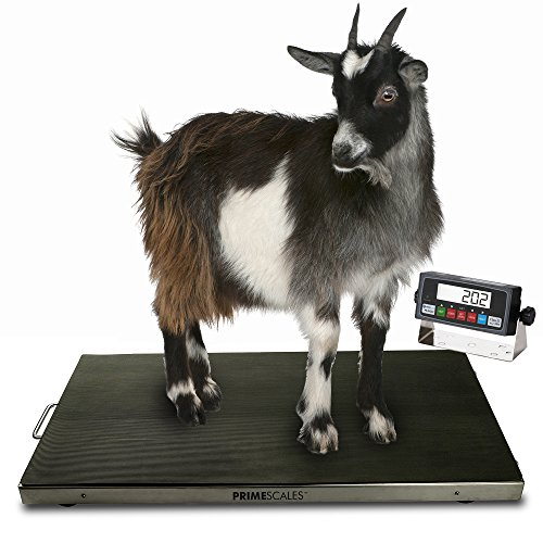 "Prime Scales | 700lb Veterinary Scale | Digital Weighing Equipment | Anti-Slip Mat for Pets or Livestock | Determine Weight for Small to Medium Sized Animals | Peak Hold Function | 38"" x 20"" x 2"""