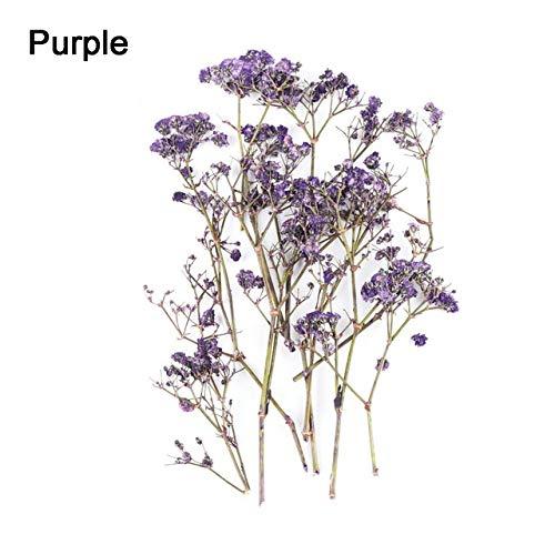 Roovtap 10 Beutel/Bag Getrocknete Blumen und getrockneten Pflanzen for Resin Herstellung-Prozess DIY dekorative Accessoires Dried Flower (Color : Z)