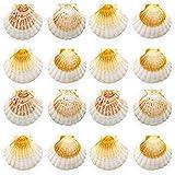 Finoly Conchas de Vieira Natural Grandes Pack 4/8/12/16 Unidades para Cocina Decoración...