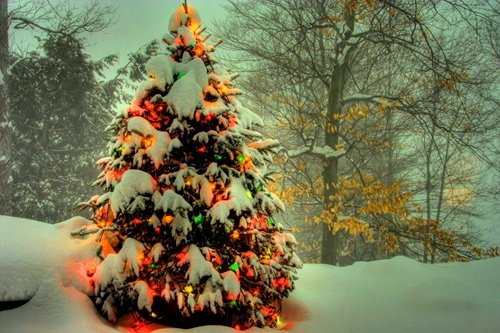 Glowing Christmas Tree in Winter - Art Print Poster,Wall Decor,Home Decor(36x24inches)