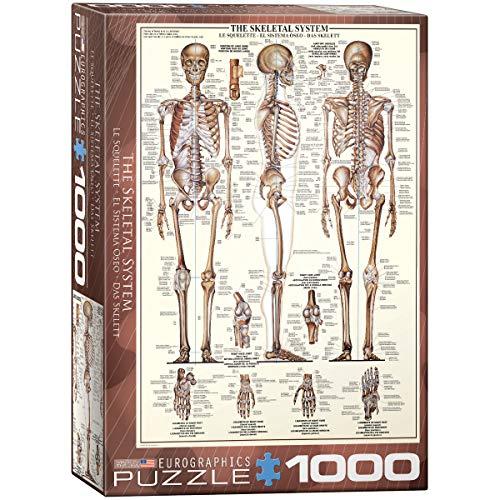 Eurographics 1000 Teile - Das Skelett