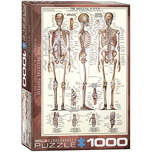 EuroGraphics Puzzle Das Skelett