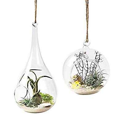 Mkono 2 Pack Glass Hanging Planter Air Plant Terrarium, Globe and Teardrop