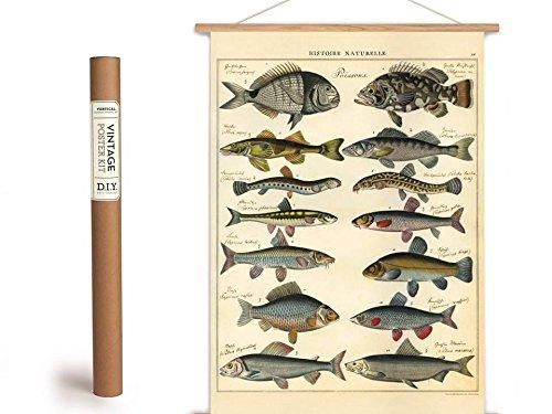 Cavallini Vintage Poster Set mit Holzleisten (Rahmen) und Schnur zum Aufhängen, Motiv Fische