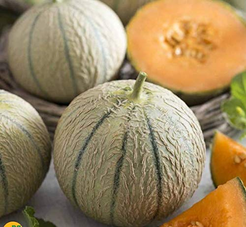 Ultrey Samenshop - Bio Duft-Zuckermelone Samen Mini-Melone Melonesamen Obst Frucht Saatgut saftig Haus Bonsai Pflanze mehrjährig winterhart für Garten Balkon/Terrasse