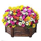Flores Paisaje para cercas,Semillas de Flores perennes,Semilla de Girasol, fácil de Vivir en macetas de Interior-Solapa única_0.1kg