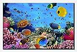 wandmotiv24 Cuadro en Lienzo Arrecife de Coral con Peces 80x50cm (Ancho x Alto) Foto panorámica Foto Lienzo Mural Foto Regalos M0480