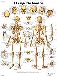 3B Scientific VR3113UU Impreso En Papel, el Esqueleto Humano