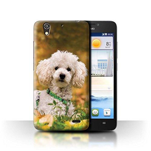 Hülle Für Huawei Ascend G630 H&/Eckzahn Rassen Pudel/Poodle Design Transparent Ultra Dünn Klar Hart Schutz Handyhülle Case