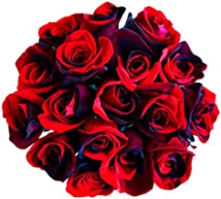 12 Stems - Fresh Cut Black and Red Roses from Flower Explosion