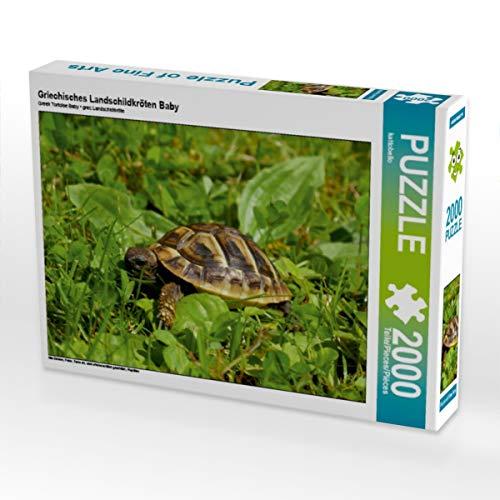 CALVENDO Puzzle Griechisches Landschildkröten Baby 2000 Teile Lege-Größe 90 x 67 cm Foto-Puzzle Bild von Kattobello