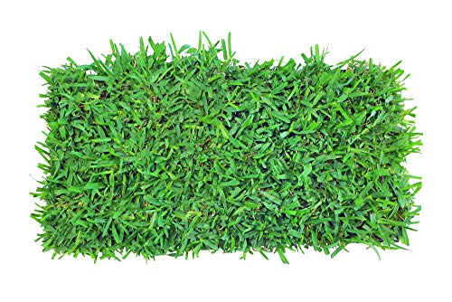 Palmetto St. Augustine Grass 72 Count Plug Tray - Covers 72 Sqft
