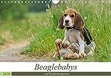 Beaglebabys auf Entdeckungstour (Wandkalender 2020 DIN A4 quer): Junge Beagles auf Entdeckungstour (Monatskalender, 14 Seiten ) (CALVENDO Tiere)