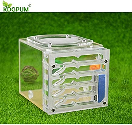 KDGPUM Ant Nest Active Area Ant Farm Acrylic Material Insect Nests Villa New Pet Advanced Mania for House Ants