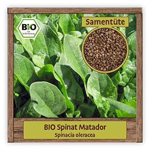 BIO Spinat Samen Winterspinat MATADOR Salat Saatgut Wintergemüse winterhart