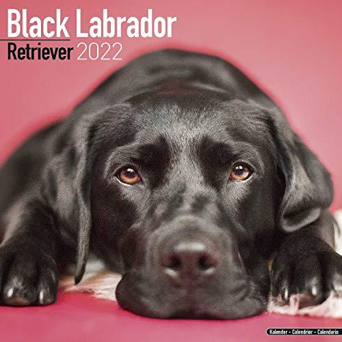 Black Labrador Retriever - Schwarzer Labrador 2022- 16-Monatskalender: Original Avonside-Kalender [Mehrsprachig] [Kalender]: Original BrownTrout-Kalender [Mehrsprachig] [Kalender] (Wall-Kalender)
