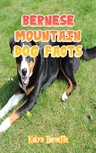 BERNESE MOUNTAIN DOG FACTS: BERNESE MOUNTAIN DOG fact for girl age 1-10...