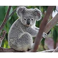 Full Square Diamond 5D DIY Diamond Painting Koala Embroidery Cross Stitch Rhinestone Mosaic Home Decor Square 30x40cm