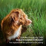 AniForte Wurm-Formel 20 g- Naturprodukt für Hunde - 6