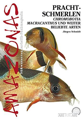 Prachtschmerlen: Chromobotia Macracanthus und weitere beliebte Arten (Art für Art)