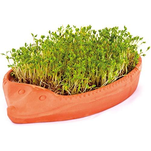 tomgarten Römertopf Kresse-Igel | mit Samen und Gebrauchsanweisung | Komplettset zur Anzucht | Ton | 24 x 14 x 4 cm