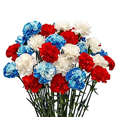 FlowerPrime 50 4th of July Carnations Red White and Blue - Special Holiday Variety Pack Fresh Natural Cut Flowers by Flower Prime