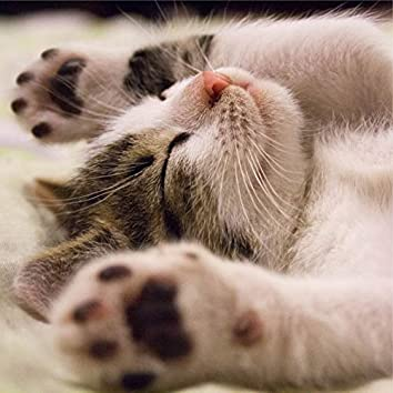 Tracks to Relieve Anxiety and Relax Cats