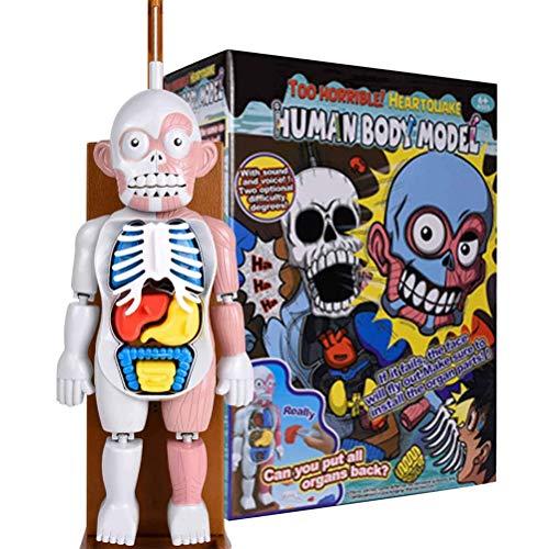 Jackallo Modelo de Cuerpo Humano de Juguete para niños, Modelo de ensamblaje de Rompecabezas anatómico de órganos Humanos 3D para enseñar educación Escuela Rompecabezas de Juguete