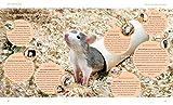 Ratten: So fühlen sich die Kletterkünstler rundum wohl (GU Tierratgeber) - 9