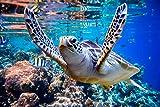 DesFoli Meer Schildkröte Unterwasser Poster Kunstdruck