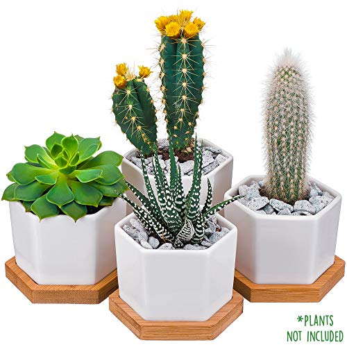 CHICHO FRIENDS - Succulent Pots for Plants - Small Flower Pots - 2.6 inch - Set of 4 - White Succulent Planters with Drainage Holes with Bamboo Tray - Pots for Cactus Flower - Mini Ceramic Plant Pots