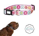 PetLove - Collar para perro acolchado y ajustable de nailon, color...