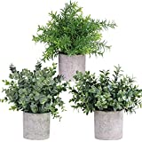 Winlyn Mini Potted Plants Artificial Eucalyptus Boxwood Rosemary Greenery in Pots Faux Potted Herbs Small Houseplants 8.3'-9' Tall for Indoor Greenery Tabletop Décor Centerpiece 3 Pack